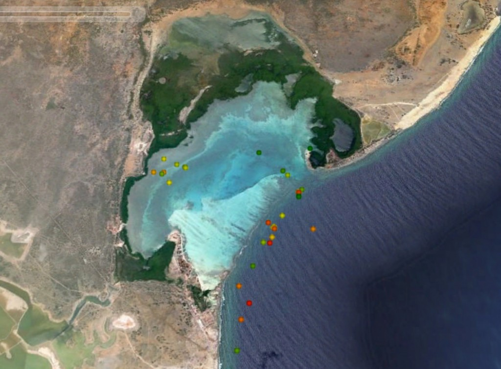 GPS locations of a sub-adult green turtle in Lac Bay Bonaire. The turtle grazes in the bay, and sleeps predominantly on the reef.