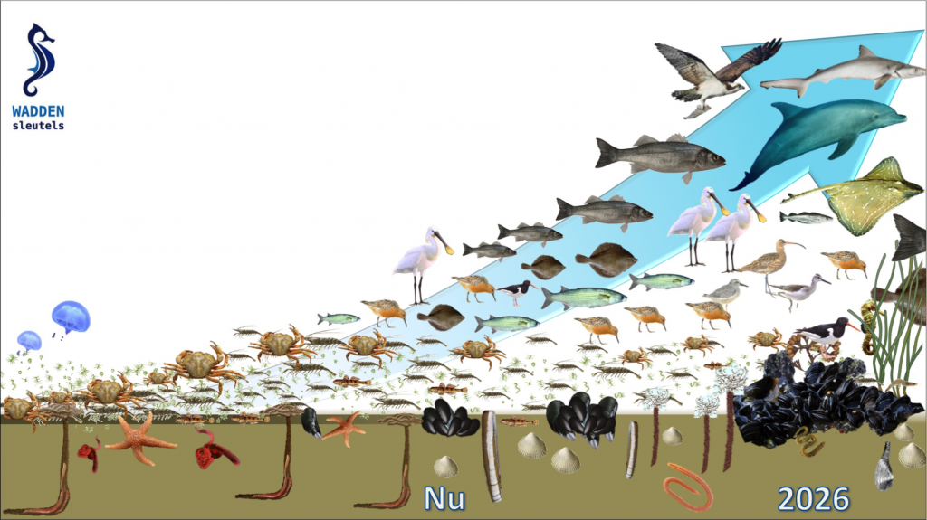 waddensea_foodweb