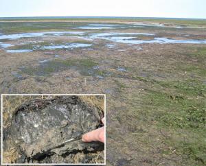Seagrass research paper